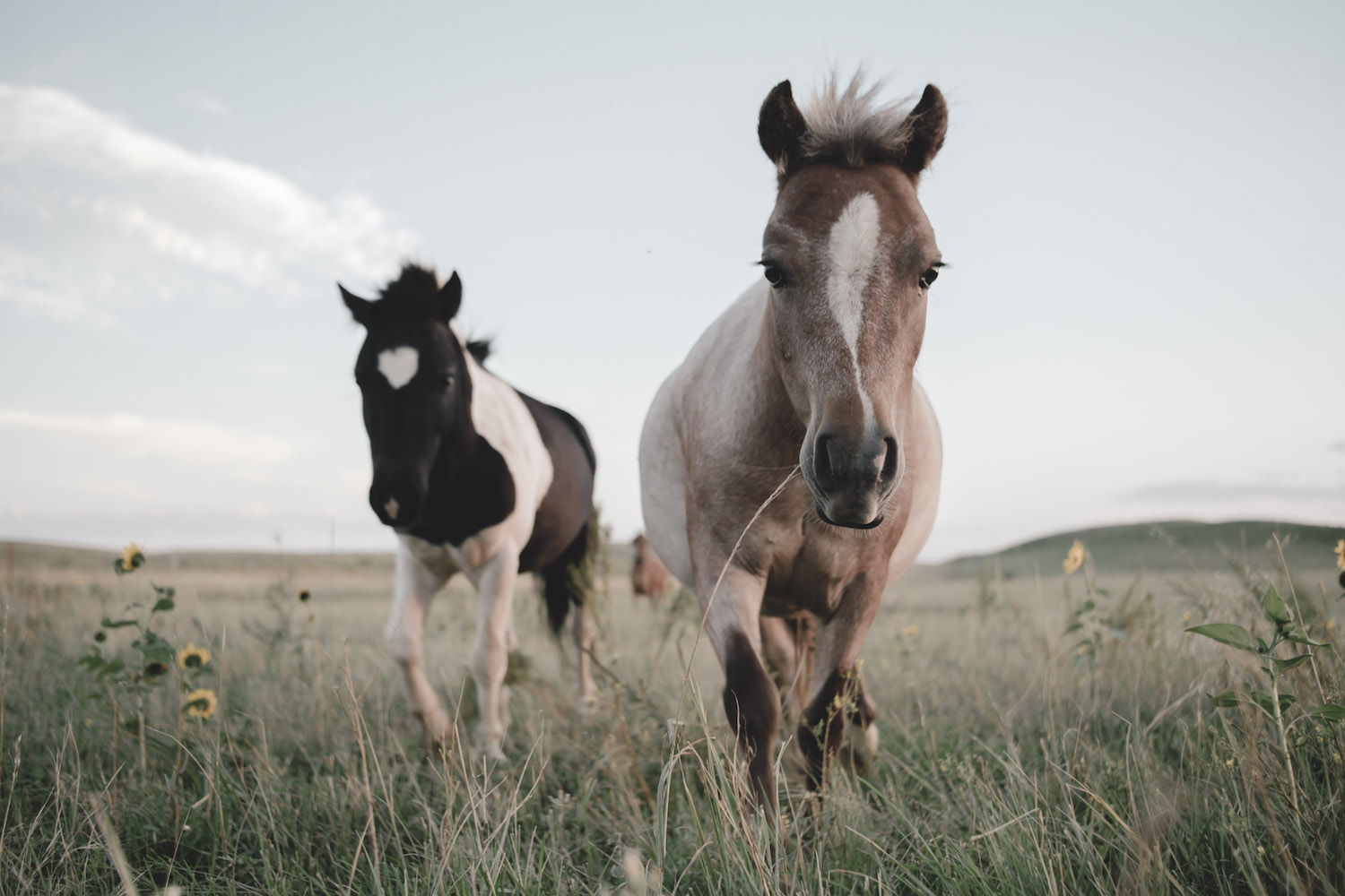 © Come To Life, Free horses on Bryan Dean's ranch